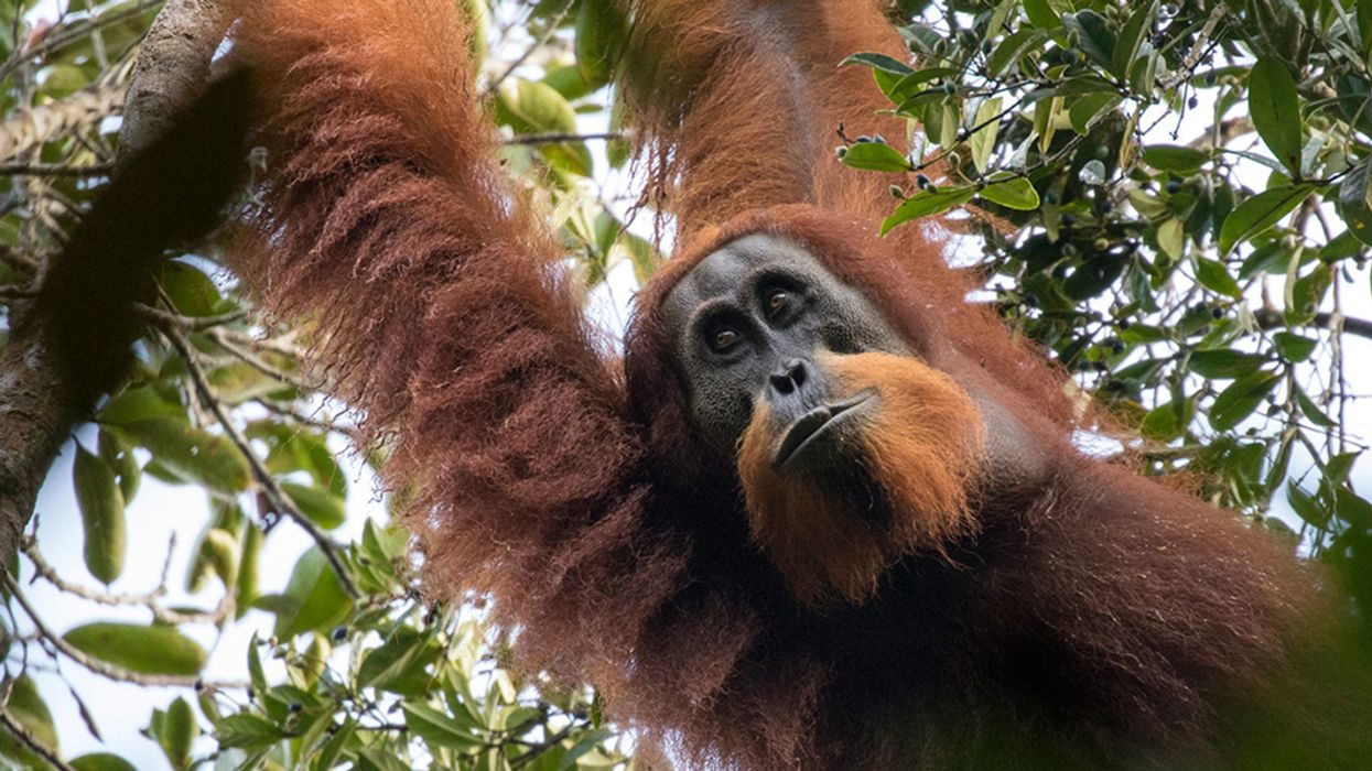 300+ Mammal Species Could Still Be Discovered, Scientists Say