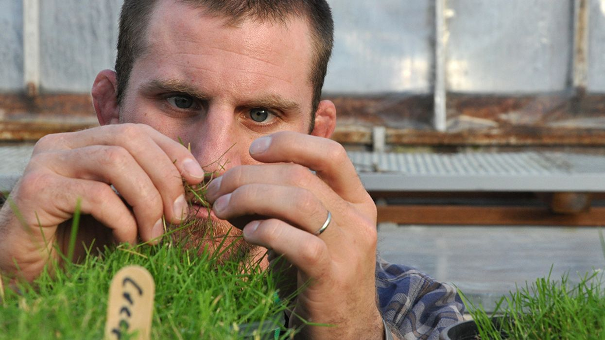You Need to Be Paying Attention to GMO Grass