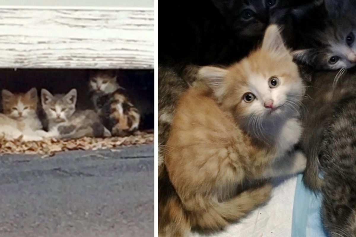 10 Kittens Saved From Rooftop Along with Cat Moms and Dad, Have Their Lives Turned Around