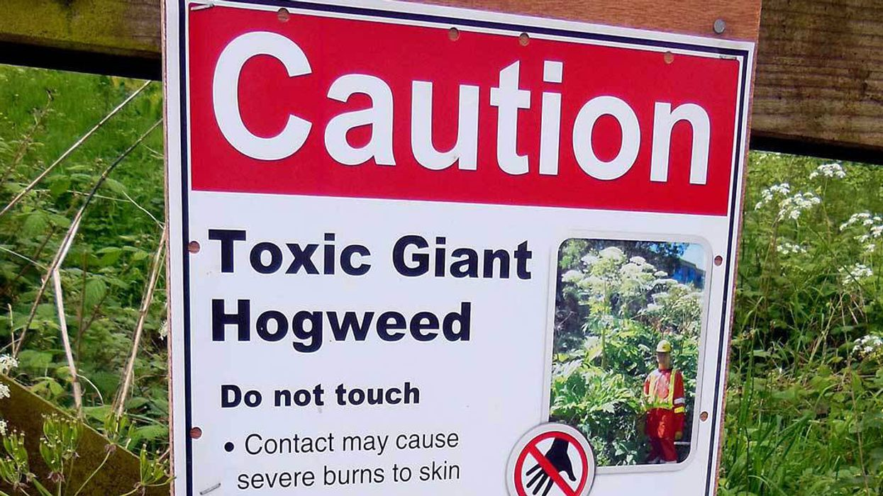 Invasive, Blinding Weed Spreads to Virginia