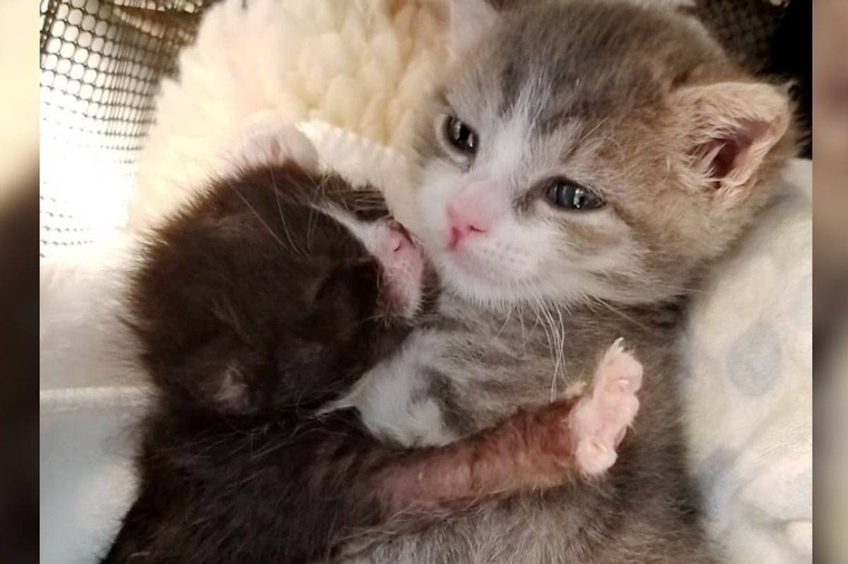 Kitten Who Had Rough Start, Fights to Live and Even Helps Tinier Kittens In Need