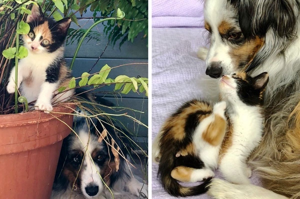 Dog Misses His Old Cat Until a Tiny Kitten Shows Up Needing a Mom