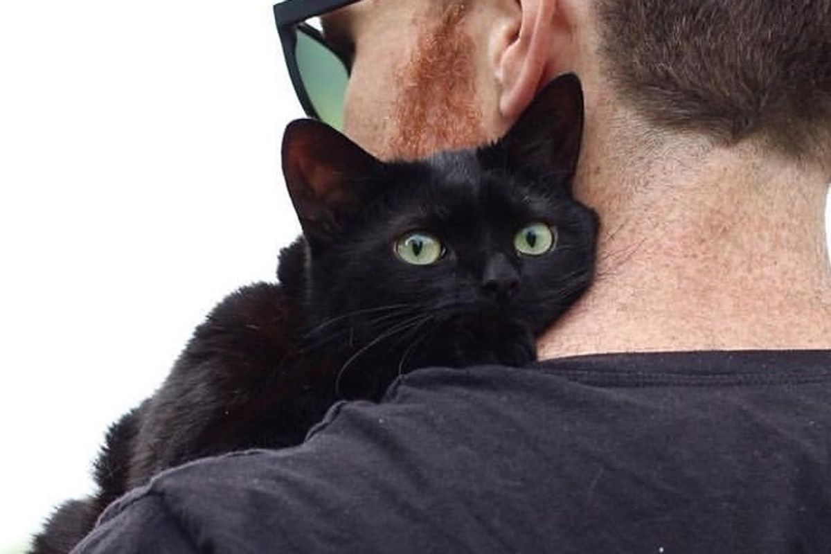 Shelter Cat Waited Months for Home, Hops on Man's Lap and Won't Let Him Go