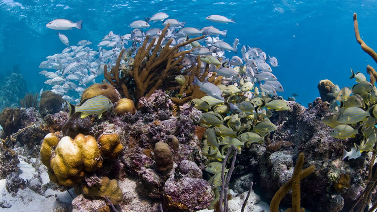 Belize's Incredible Barrier Reef Recovers From 'In Danger' Status