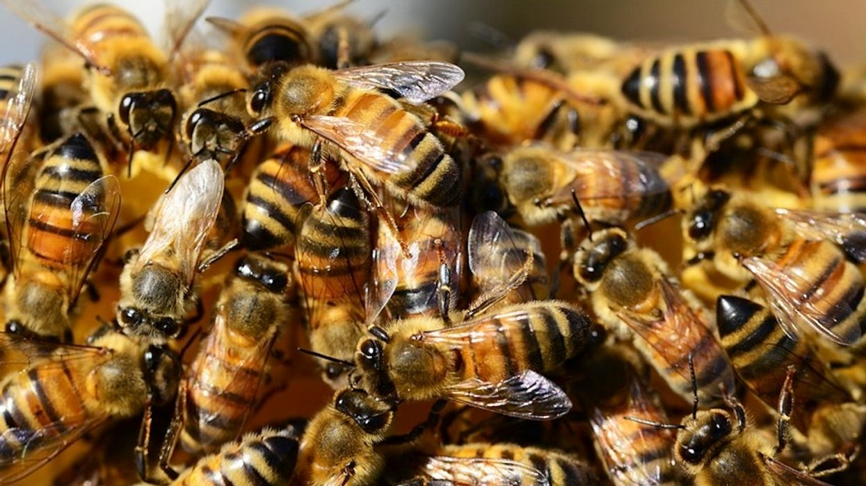 Fl. Homeowner Regrets Killing Thousands of Honeybees