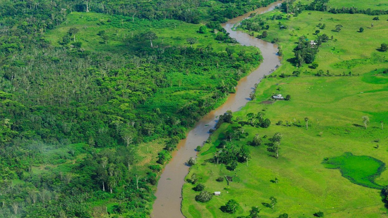 Tropical Forests Lost 40 Football Fields of Tree Cover Per Minute in 2017