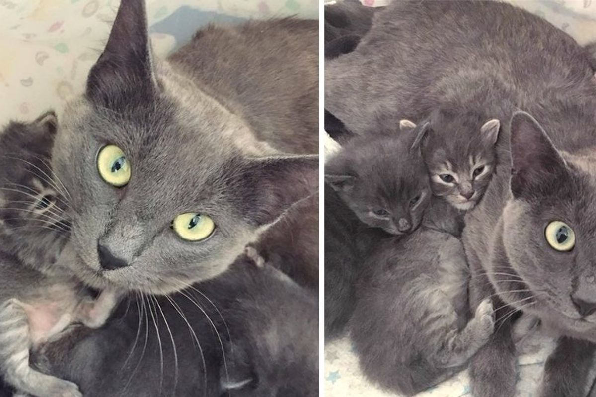 Scared Cat Mom Finds Love When Woman Gives Her Kittens Help and Comfort