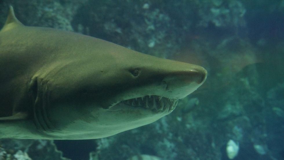 https://pixabay.com/en/shark-teeth-underwater-sea-426565/