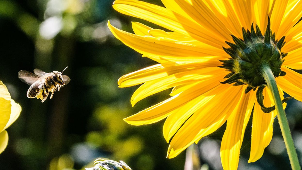 Great Fall-Blooming Plants for Pollinators