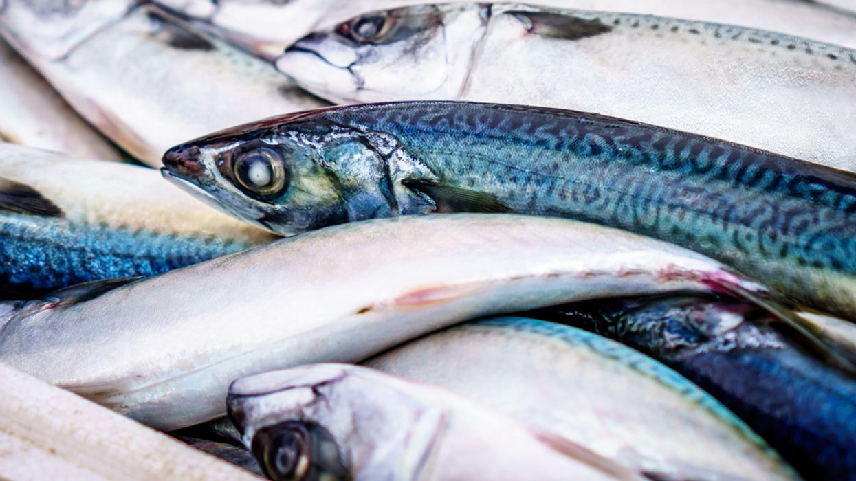 Fish Are Losing Their Sense of Smell