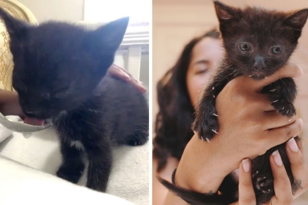 Kitten Found with Eyes Crusted Shut Gets Help to See Again