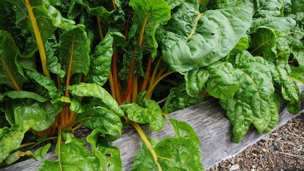 7 Crops to Plant This August
