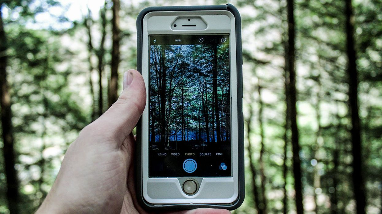 Our Cellphone Addiction Is Turning Wireless Tech Into an Invisible Weapon That's Destroying Wildlife