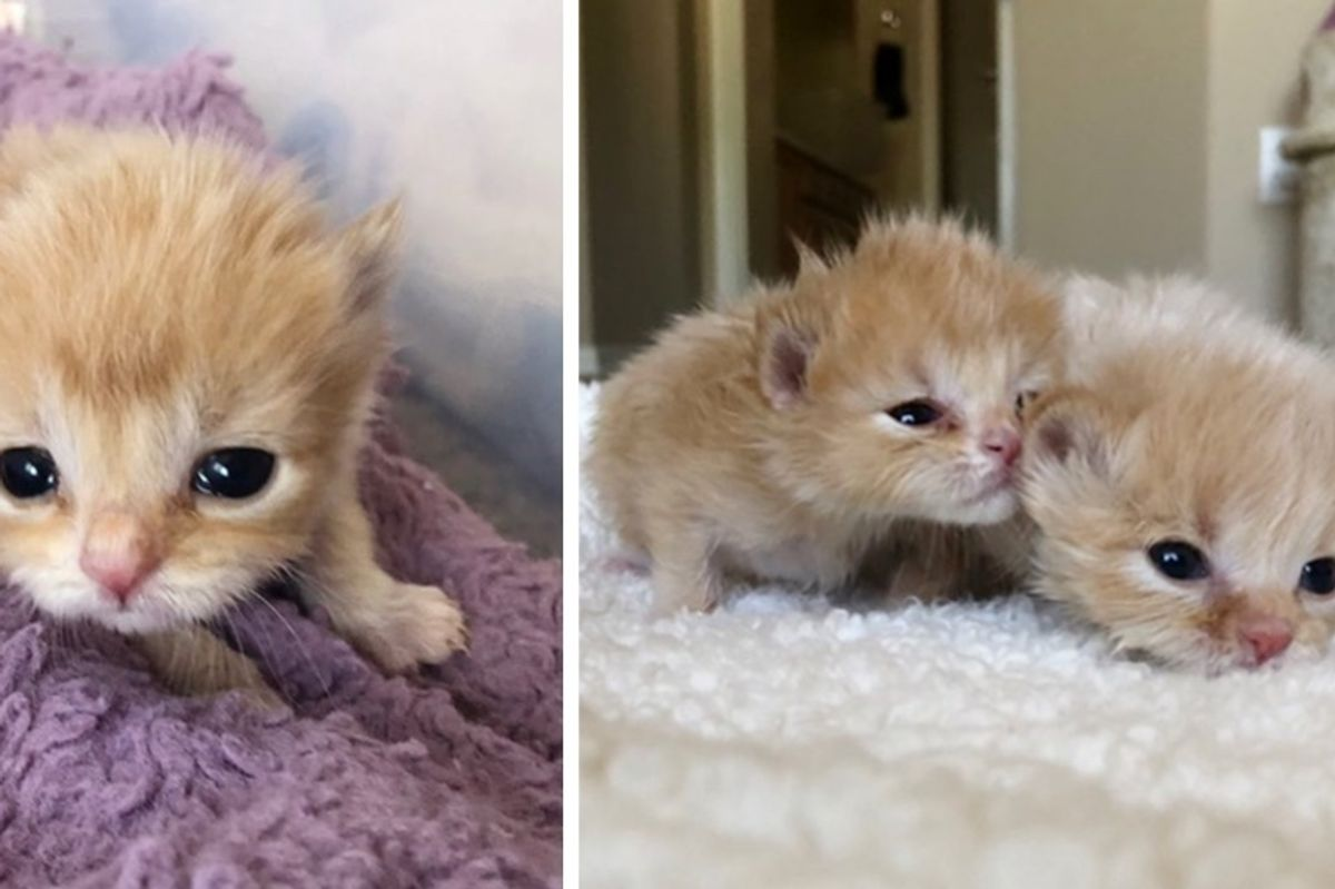 2 Kittens Who Were Found Abandoned, Survive All Odds Even Though No One Expected Them to