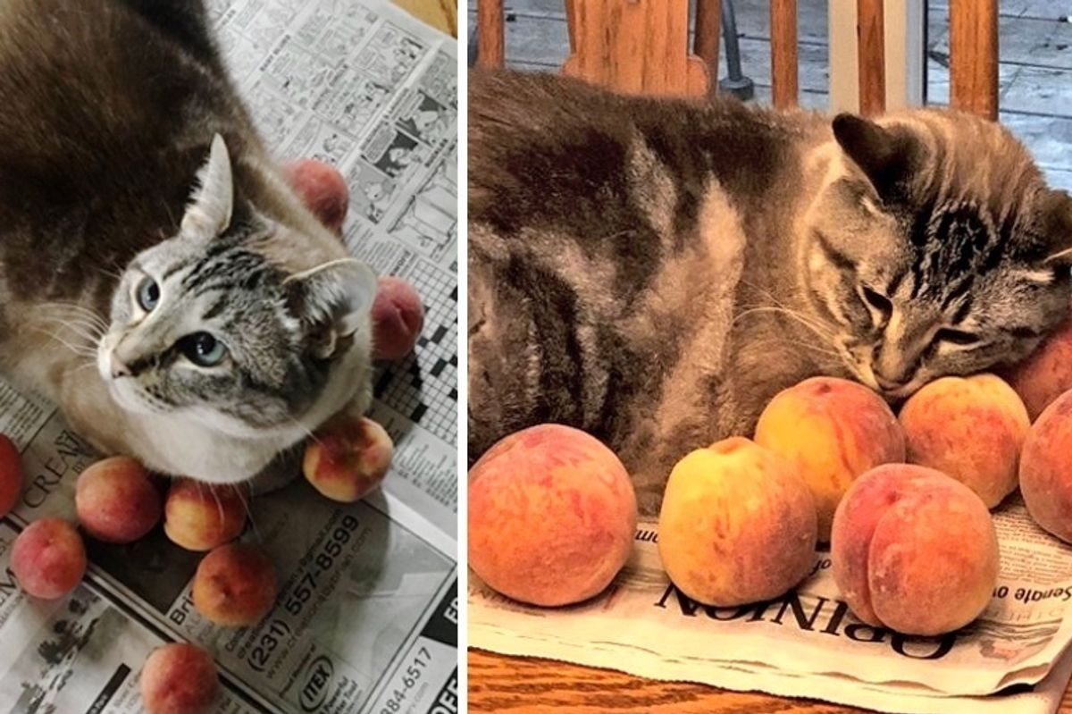 Family Adopts Kitten and Later Discovers His Love of Snuggling Peaches