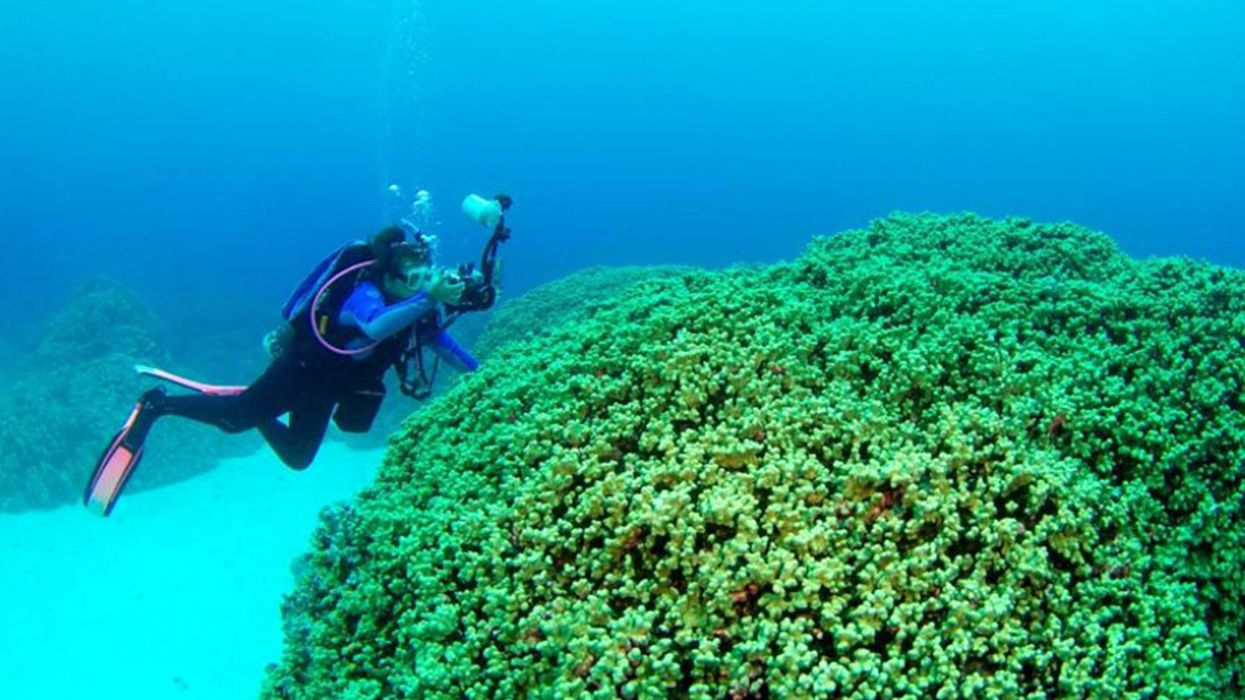 Forecasting Coral Disease Outbreaks Could Buy Time to Save Reefs