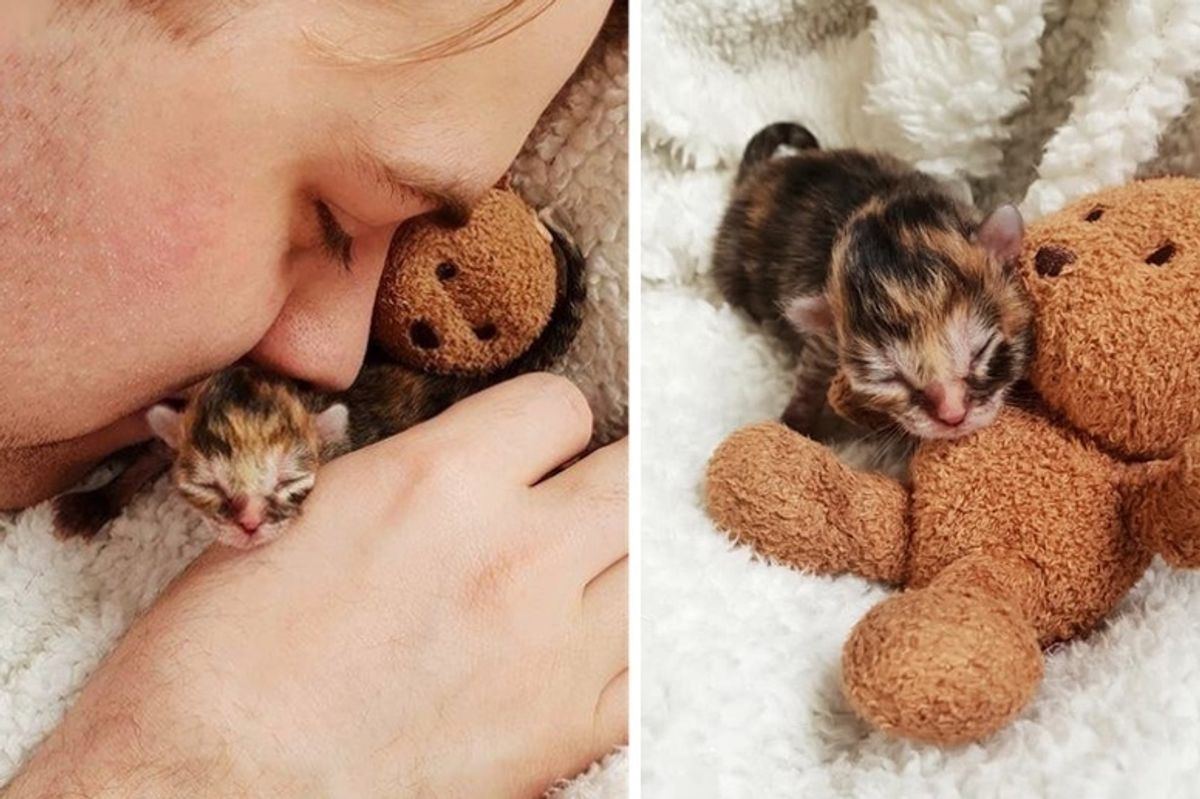 Preemie Kitten Rejected by Cat Mom, Finds Love in Family that Saves Her Life