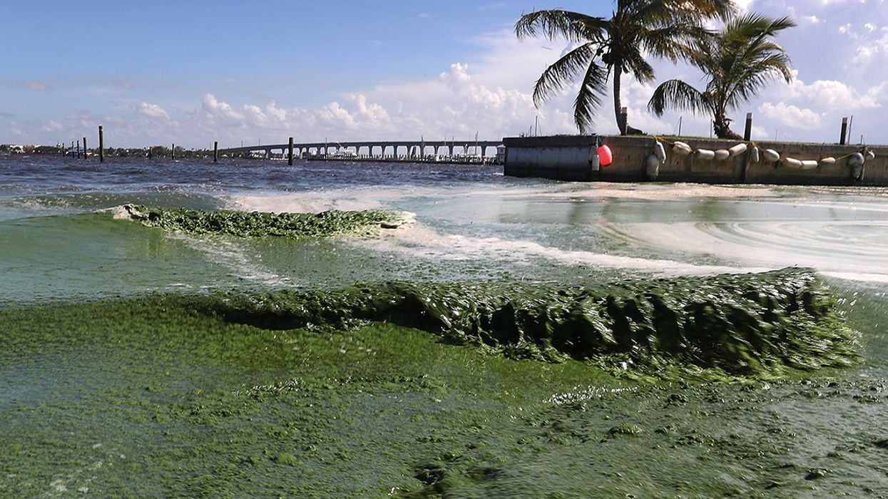 What Is Causing Florida's Algae Crisis? 5 Questions Answered