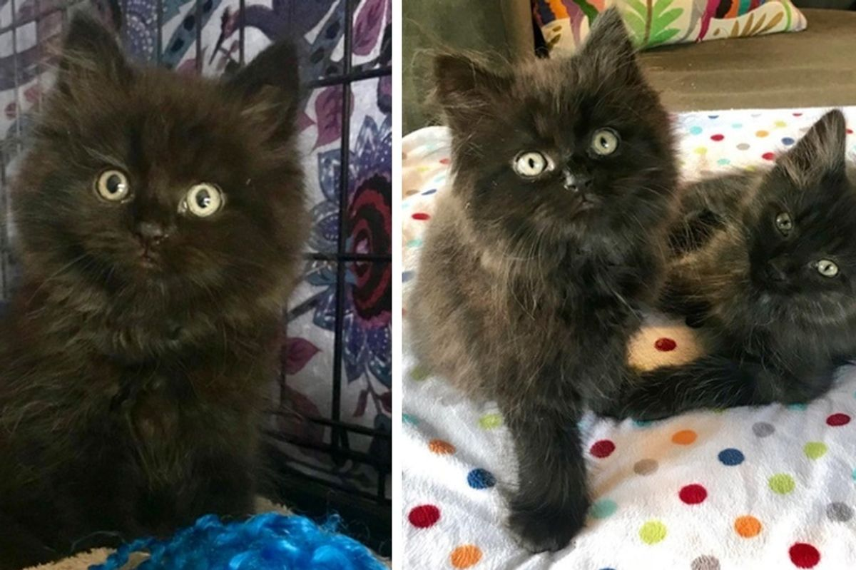 Rescued Kitten Needed a Friend So They Found Him a Brother From Another Mother