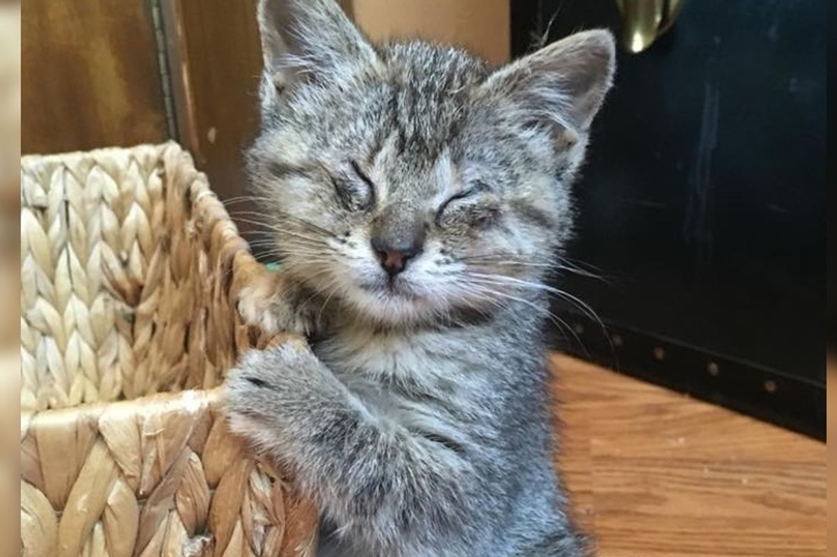 Kitten Who Can't See, Finds Love for the First Time and Can't Get Enough of It