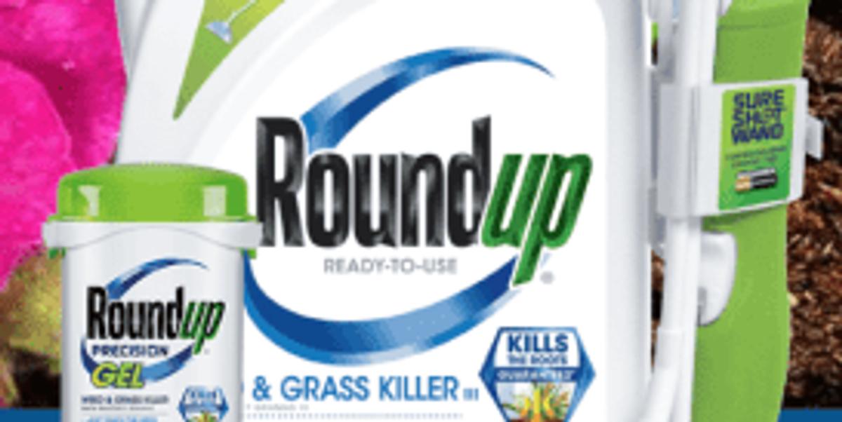 Monsanto scientist denies Roundup cancer link in trial