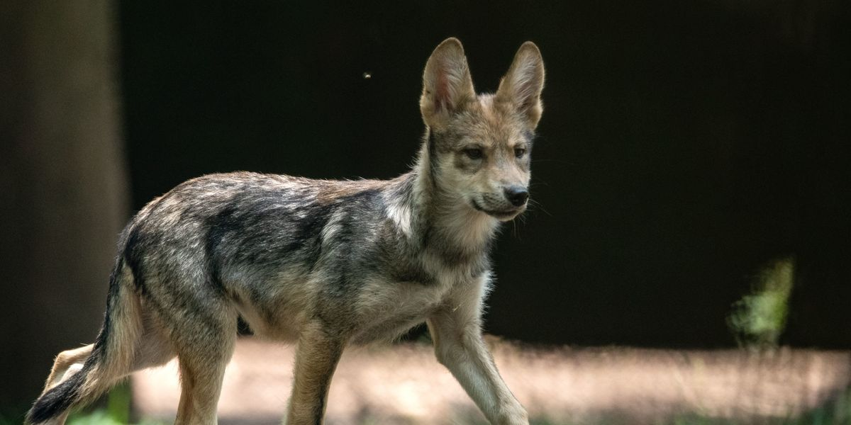 Trump Policy Changes Could Threaten Countless Endangered Species