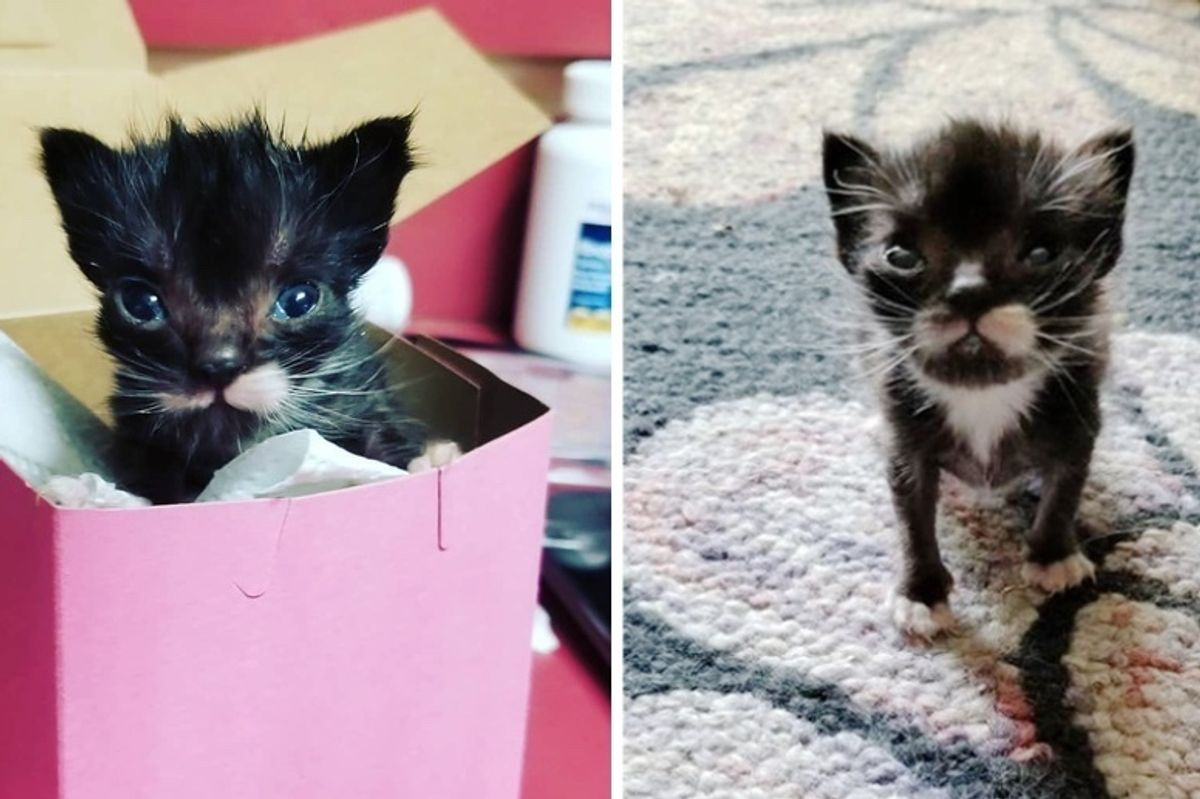 Kitten with Purrfect Mustache Can't Grow Until He Finds Love in a Surrogate Dad