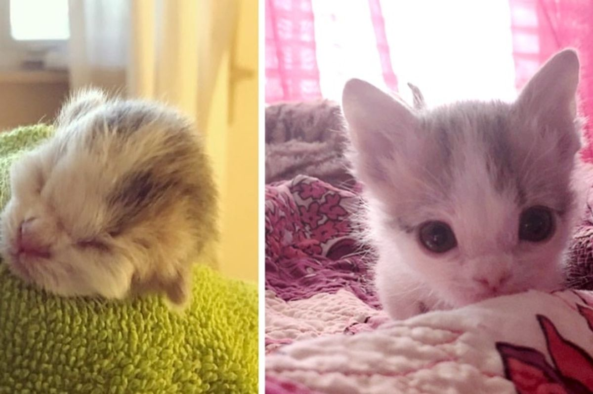 Kitten Abandoned at Birth Found Family that Saved Her Life Even Though Others Said She Might Not Survive