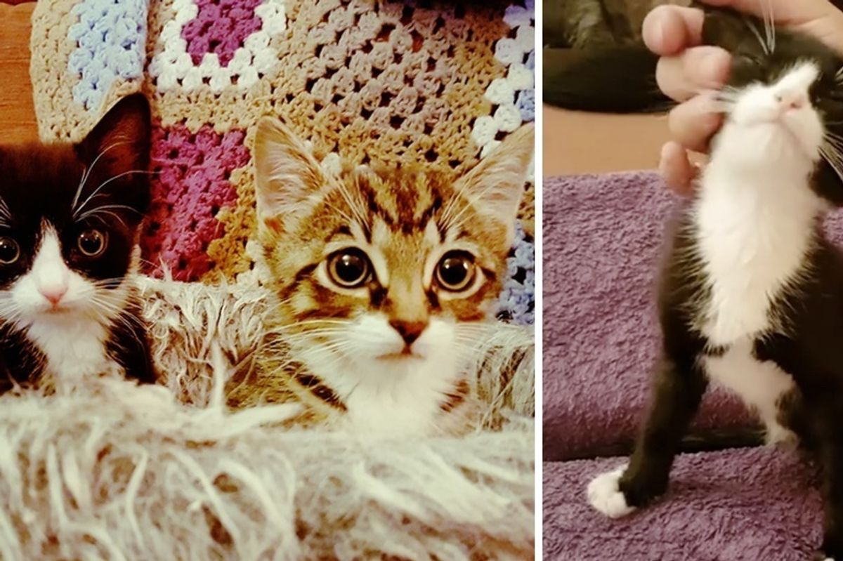 Kitten Brothers, Both Born with Just 2 Legs, Share an Incredible Bond