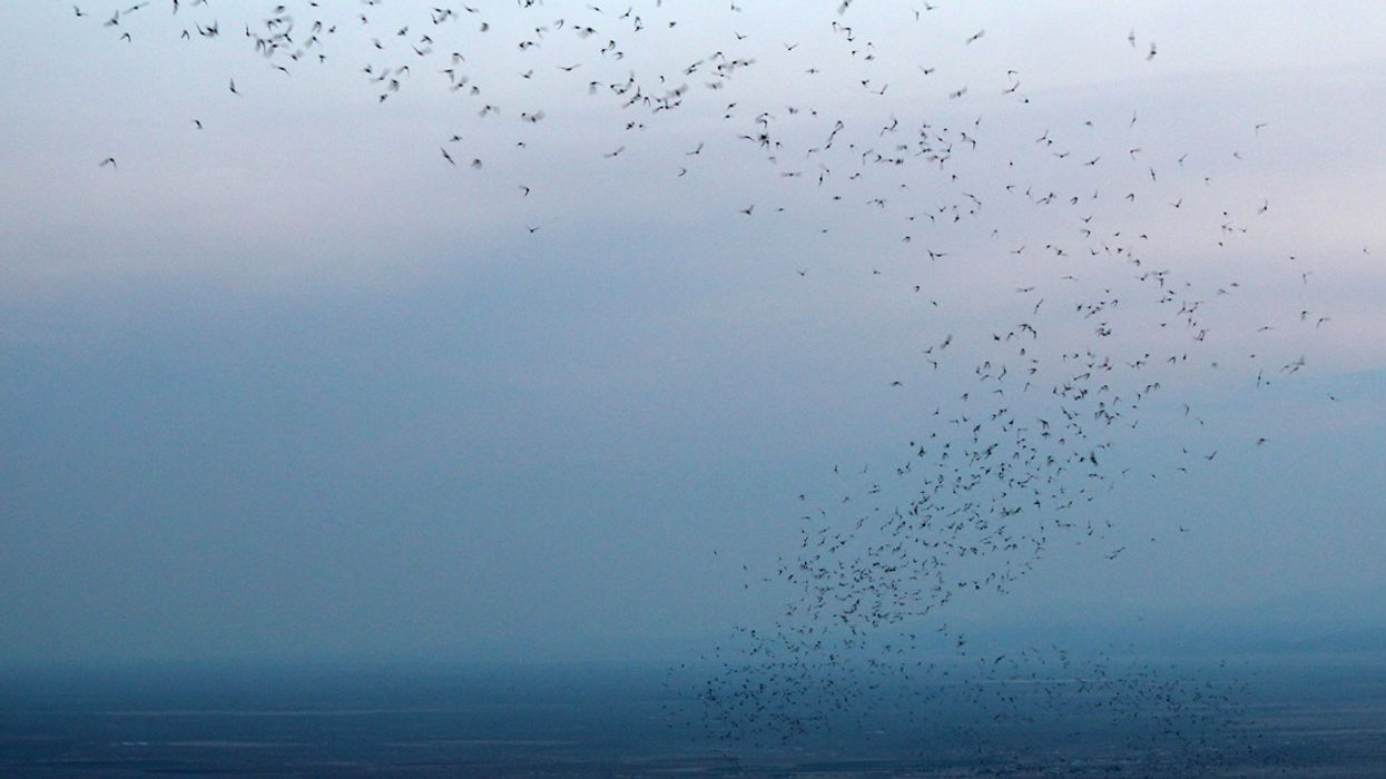 Night-Hiking With the San Luis Valley's Bachelor Bats