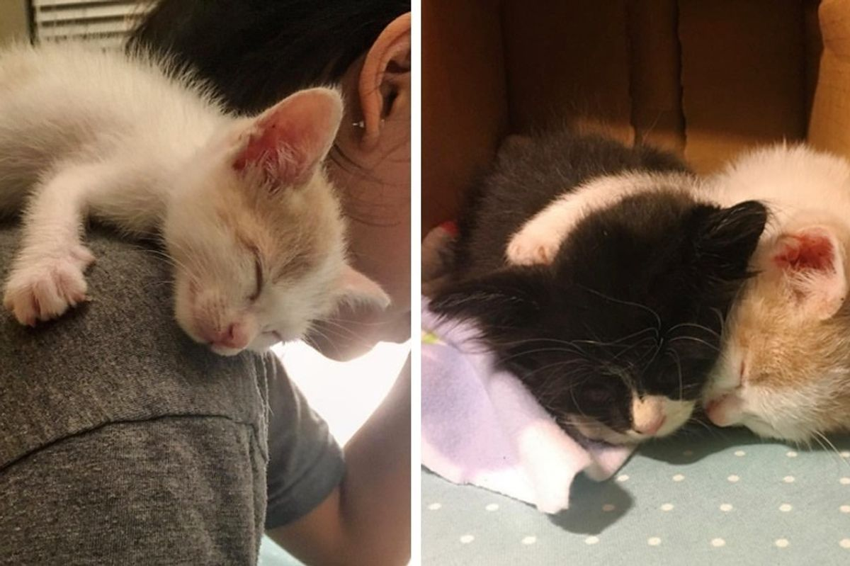 Rescued Kitten Clings to Everyone Until He Finds a Friend He's Been Waiting For