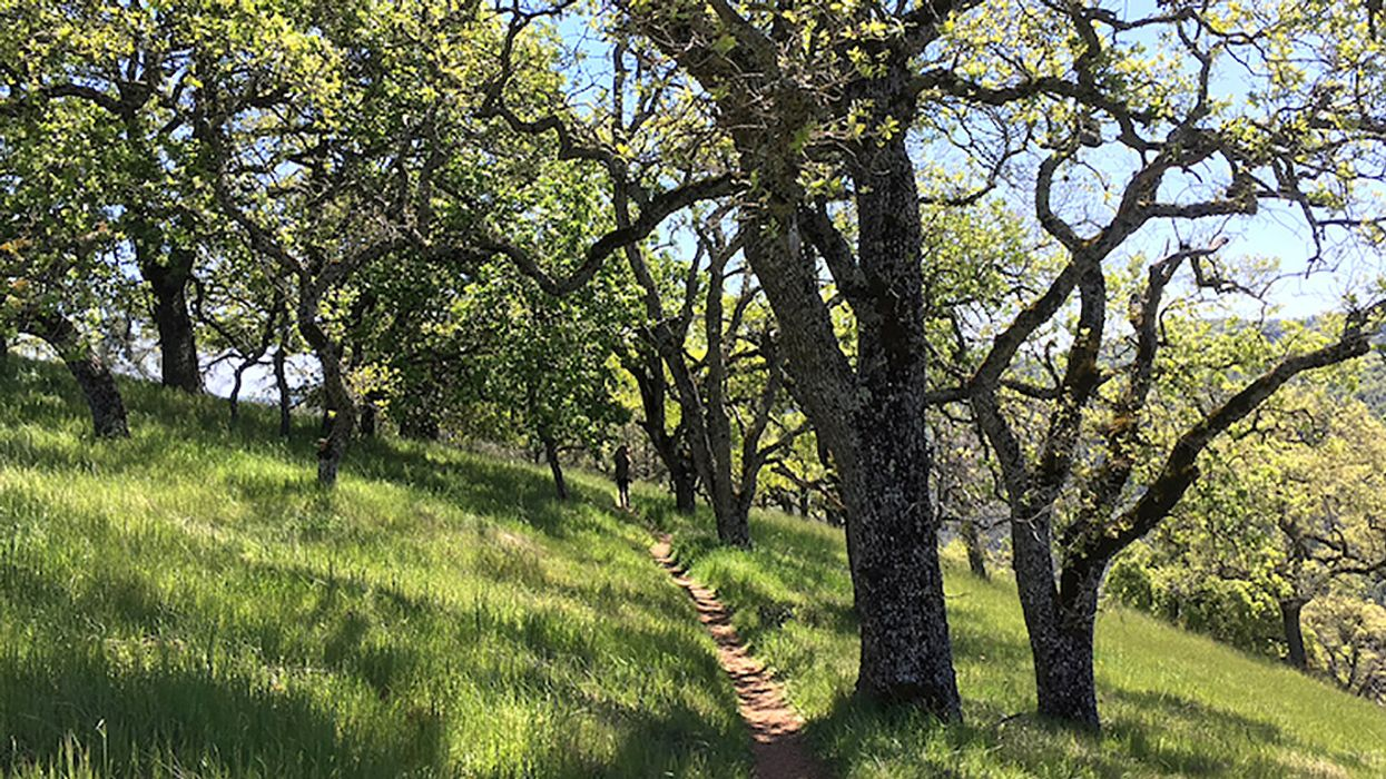 Henry Coe State Park Is the Bay Area's Best-Kept Backpacking Secret