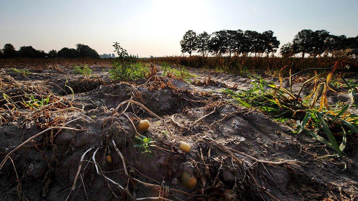 European Drought Threatens Harvests From Sweden to the Czech Republic