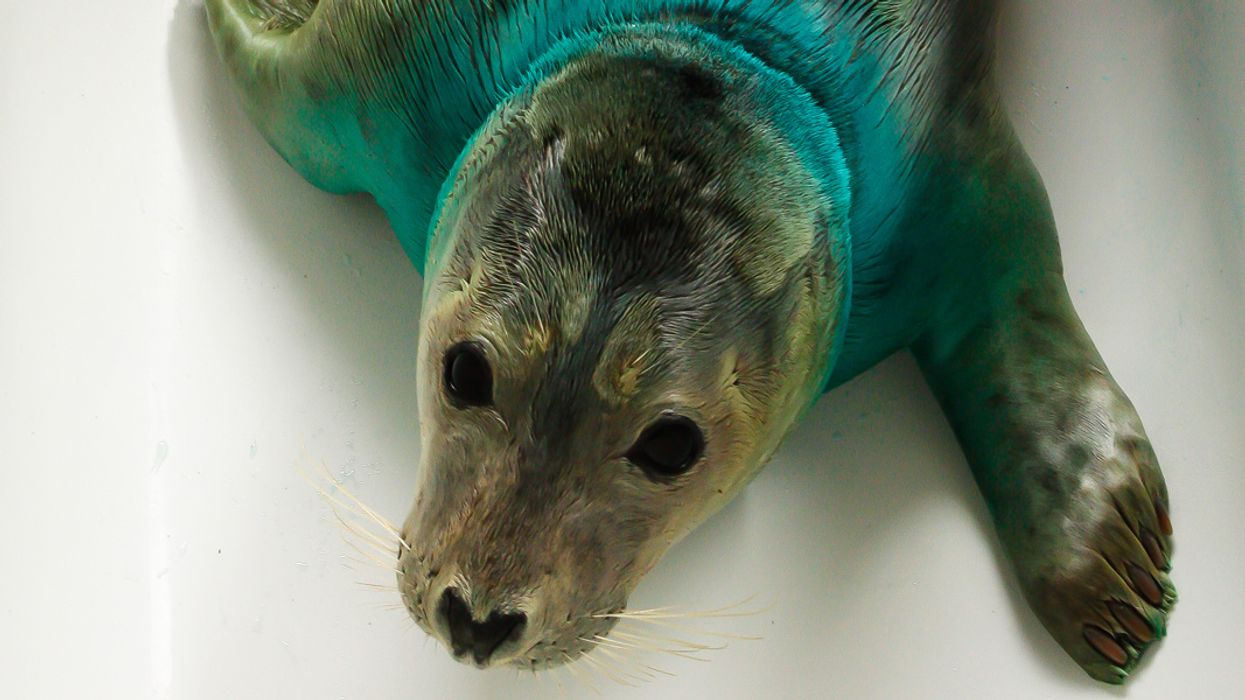 Watch: Seal Rescue Ireland May Change Your Mindless Plastic Consumption Habits