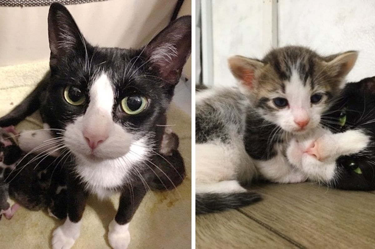 Cat Walks Up to Young Woman, Asking for Help for Her Kittens on the Way