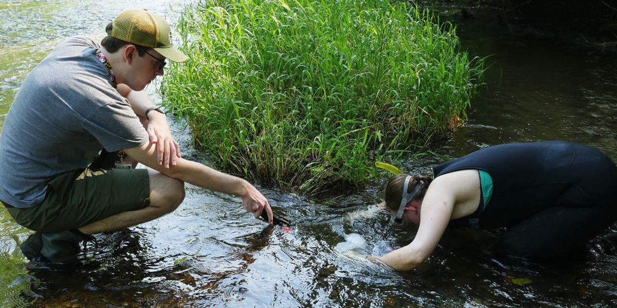 Bringing back natural water filters in Maryland and beyond