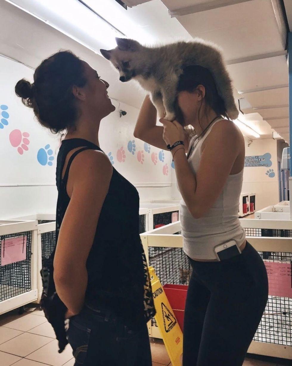 puppy on head