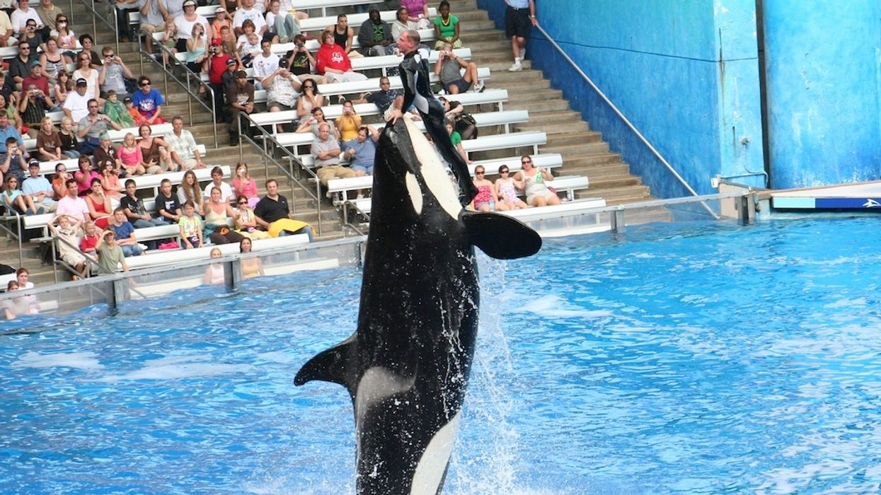 Travel Giant Cuts Ties With SeaWorld Over Killer Whale Captivity