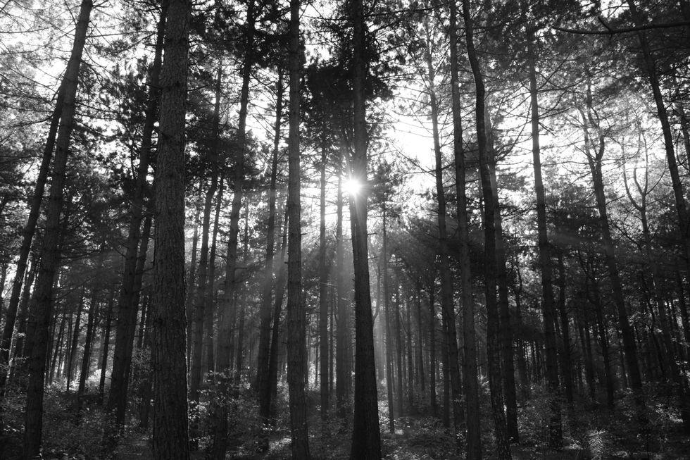 Atmospheric Black Metal Songs: July