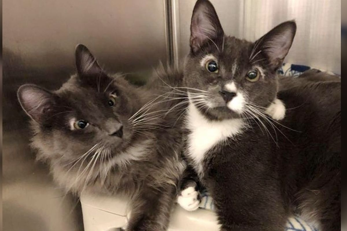 Kittens with Special Needs Found Behind Dumpster, Have Been Together Through Everything
