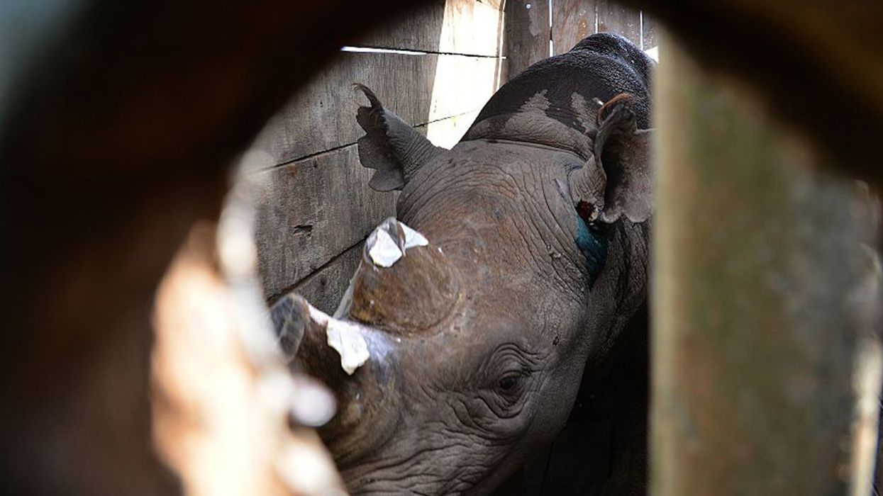 12 Black Rhinos Dead in Kenyan Sanctuary Disasters