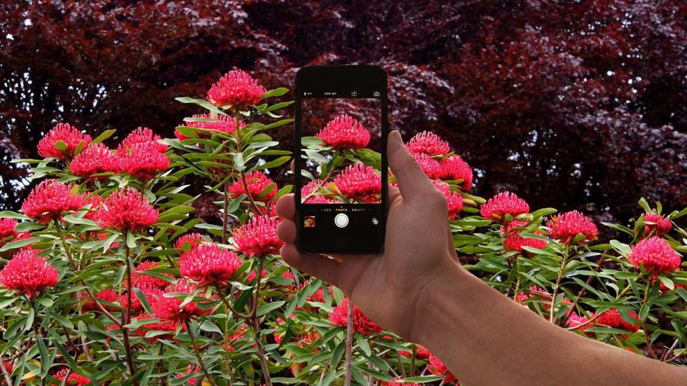 You Can Now 'Shazam' Plants and Animals with Your Phone