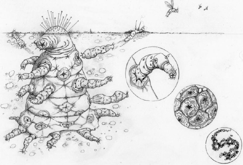 Possible alien life form.