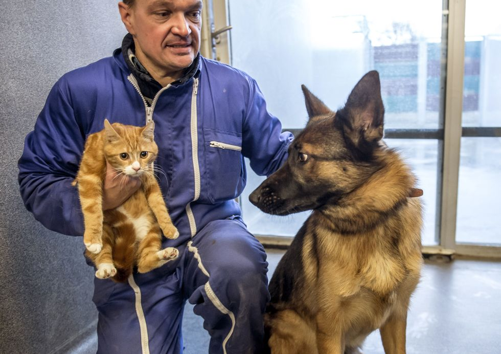 Man has a cat and a dog.
