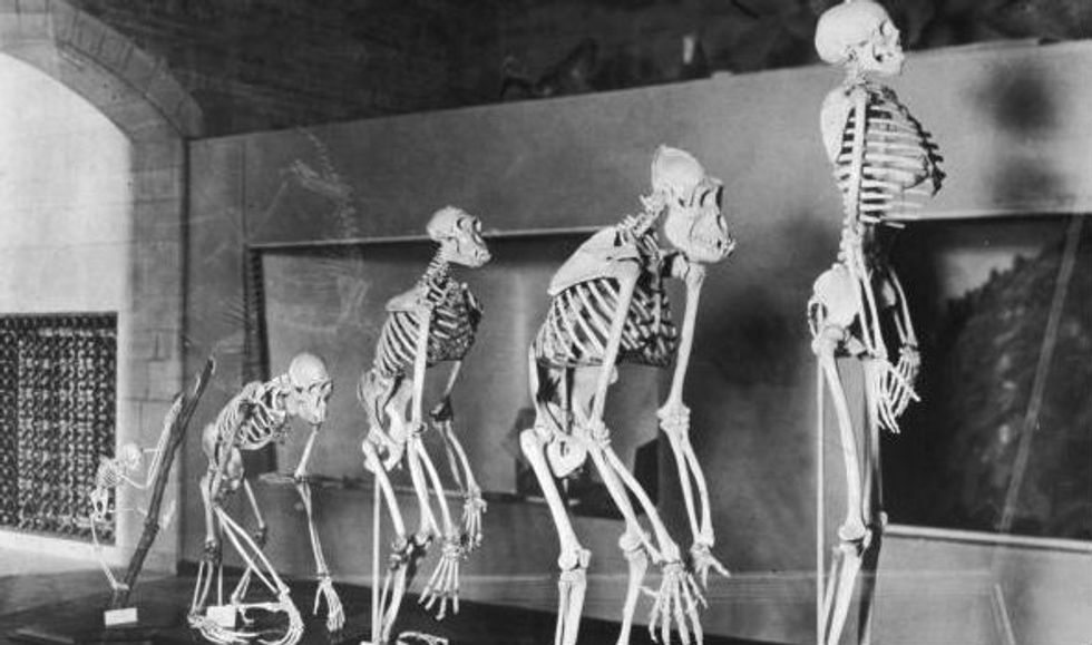 The theory of evolution: another reason to be an existentialist?