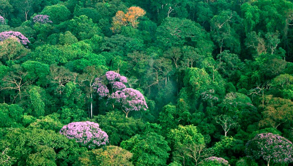 This tropical forest is flowering thanks to climate change