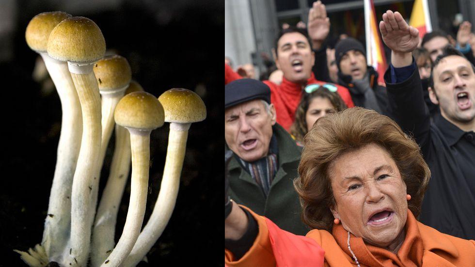 Scientists find magic mushrooms could help fight fascism