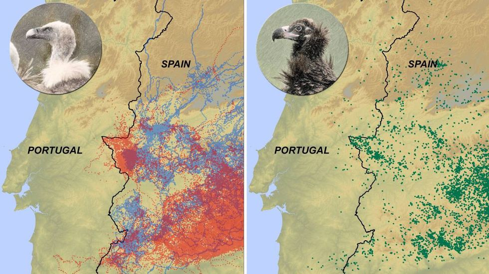 The first rule of Vulture Club: stay out of Portugal. (Image: Eneko Arrondo)