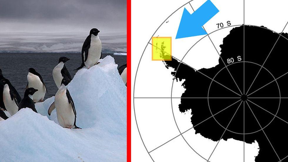 Adelie penguin super-colony in Antarctica