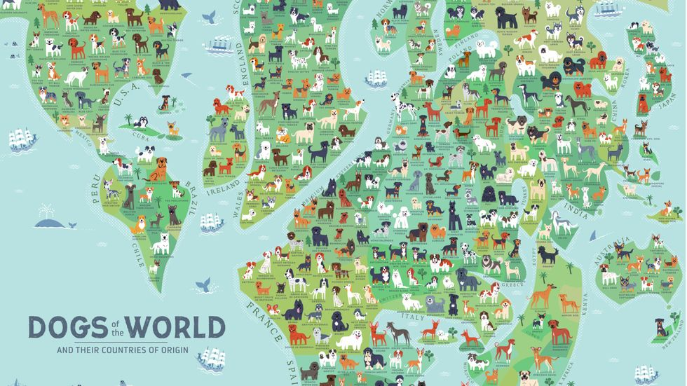Europe dominates this world map of dog breeds